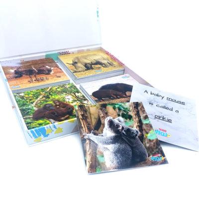Animal Flash Card Set