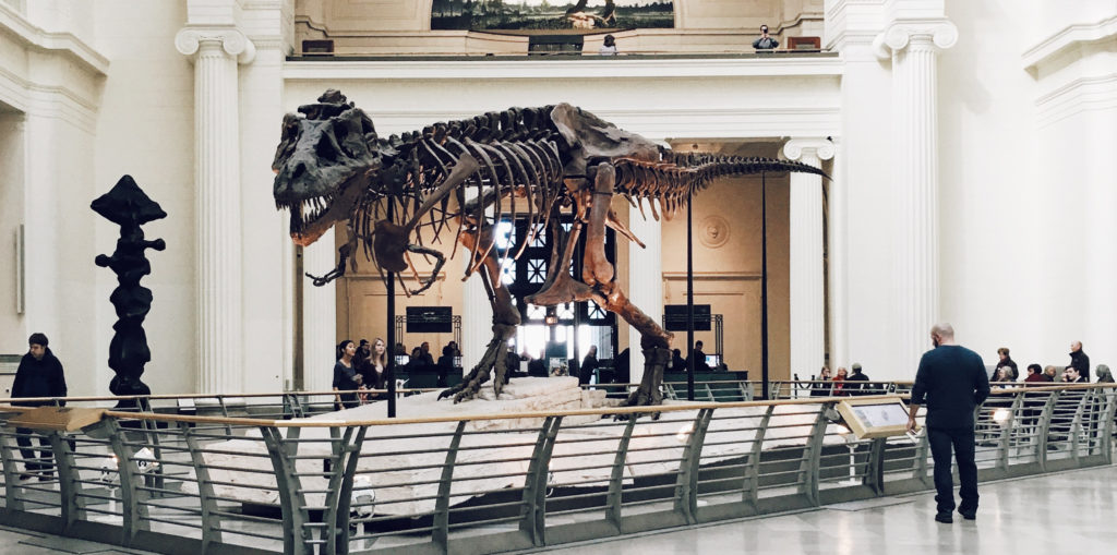 dinosaur at the museum